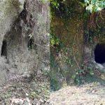 多良木町指定有形文化財「土屋・大園下横穴古墳群」
