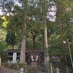 水上村指定天然記念物「白水神社境内にある桧」